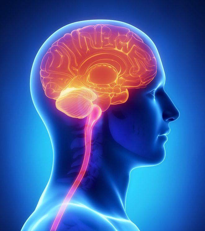 ADD CTA The amygdala - the subconscious powerhouse ...